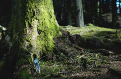 Mossy Tree and Land Royalty Free Stock Photo