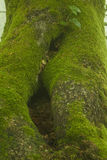 Mossy tree Stock Photos