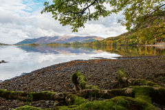 Mossy Tree Roots on the Shore of Derwent Water in Autumn Stock Photo