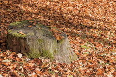 Mossy tree stump Royalty Free Stock Image