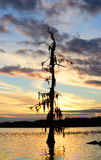 Mossy tree sunset. Tree covered with moss at sunset Stock Photo