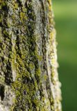 Mossy tree trunk Stock Images