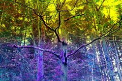 Mossy trees Royalty Free Stock Image