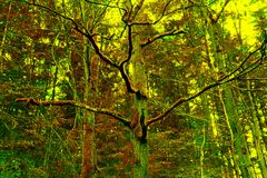 Mossy trees Royalty Free Stock Images