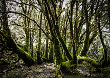 Mossy trees. Magic forest. Stock Photos