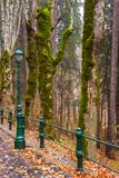 Mossy trees near stone paved street through forest. Old style me. Tal street light and fence in the foreground Stock Photos