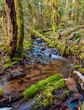 Mossy Trees of Squamish Royalty Free Stock Images
