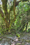 Mossy trees at wild forest Royalty Free Stock Photography
