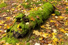 Mossy trunk Stock Photography