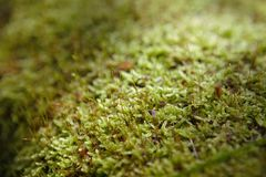 Mossy trunk fallen in the forest. Lighted from a ray of sun, close up stock images