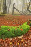 Mossy trunk with polypores Royalty Free Stock Images