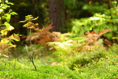 Mossy undergrowth in autumn forest Stock Photos