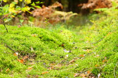 Mossy undergrowth in autumn forest Stock Photo
