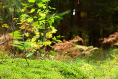 Mossy undergrowth in autumn forest Royalty Free Stock Photos