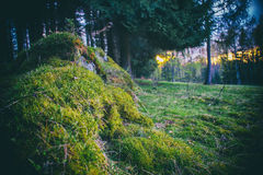 Mossy undergrowth in mountain forest. filtered cross process Stock Photo