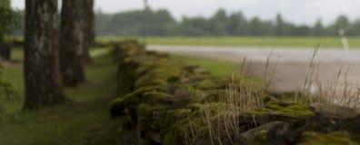 mossy vägg Arkivbild