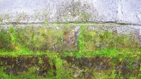 mossy vägg för tegelsten Fotografering för Bildbyråer