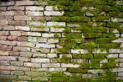 mossy vägg för tegelsten Royaltyfri Bild