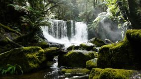mossy vattenfall arkivfilmer