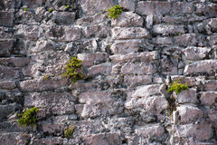 Mossy Wall Royalty Free Stock Images