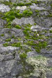 Mossy wall. Mossy wall near lake Maggiore Stock Photography