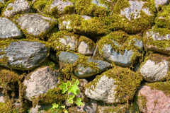Mossy wall Stock Images