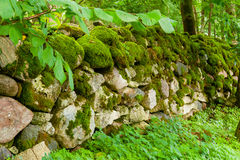 Mossy wall Stock Image