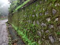 Mossy wall on a rainy day. No sunshine green slippery slimy stock photo