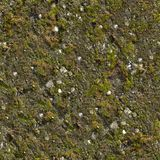 Mossy Wall Seamless Texture. Stock Photography