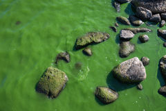 Mossy Water Stock Images