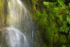 Mossy Waterfall Royalty Free Stock Photos