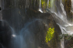 Mossy Waterfall Close Up. Close up shot of mossy waterfall under dappled sunlight Royalty Free Stock Photography