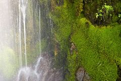 Mossy Waterfall Closeup Royalty Free Stock Images