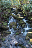 Mossy Waterfall in Smokies Stock Photography