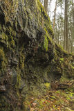 Mossy Wet Cliff Royalty Free Stock Photo