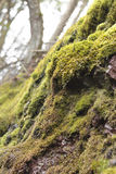 Mossy Wet Cliff Stock Image