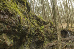 Mossy Wet Cliff Royalty Free Stock Images