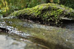 Mossy wet rock Royalty Free Stock Image