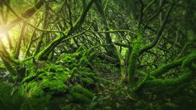 Mossy wood in Ireland. Mossy dark wood in Ireland Stock Photography