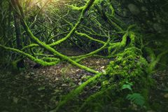 Mossy wood in Ireland. Mossy dark wood in Ireland Stock Image