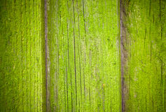 Mossy wooden background texture Stock Photo