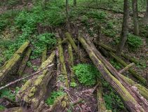 The mossy wooden bridge of rotting logs in the forest Royalty Free Stock Photography