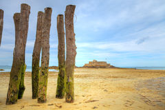 Mossy wooden logs in the beach Royalty Free Stock Photography