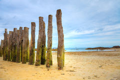 Mossy wooden logs in the beach Stock Photo
