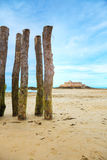Mossy wooden logs in the beach Stock Images