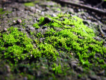 Mossy World Royalty Free Stock Image