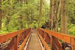most śladu dzikiej przyrody Obraz Royalty Free