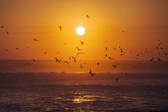 The most beatiful sunset. A beautiful sunset with a lot of seagulls waiting the fishes in the beach of Michoacan, Colola Mexico stock photos
