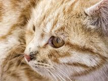The most beautiful cat eyes, closely the eyes of the cat, different and original cat pictures Stock Images