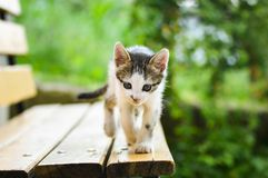 The most beautiful kitten - Tommy. Welcome home, my little kitten royalty free stock photos